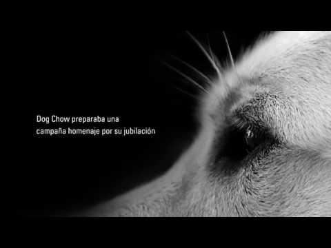 MD&SM3.3 Finalista Posteo Homenaje Jayco – Dog Chow – Nasta WPP #LatamDigital V Premios