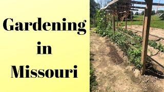Missouri garden tour - Mittleider method (2019)