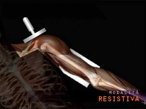 Mal di schiena inferiore gambe mani avanti in vita tutte le articolazioni che può essere