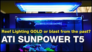 The BEST light testing performance so far? What makes T5' the reef tank light Gold Standard?