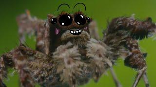 Скандальная самка паука Порша