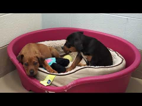 Video: WCJC Animal Shelter, May 17