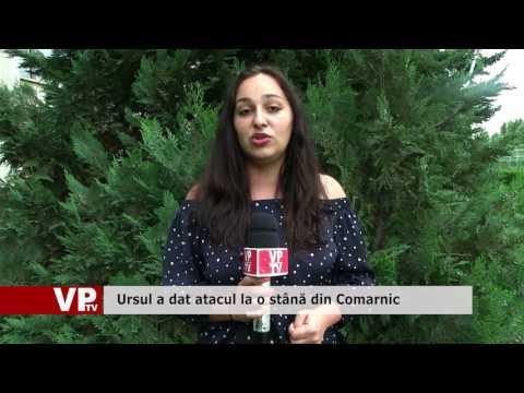 Ursul a dat atacul la o stână din Comarnic