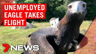 Coronavirus: Unemployed eagle give a birds-eye view of Gold Coast mountains | 7NEWS