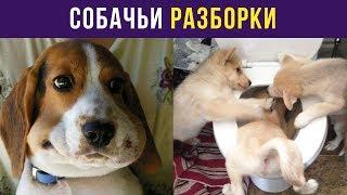 Приколы с собаками. Собачьи разборки | Мемозг #10