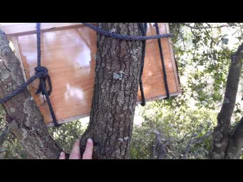 пчеловодство. мой первый пчелиный рой история