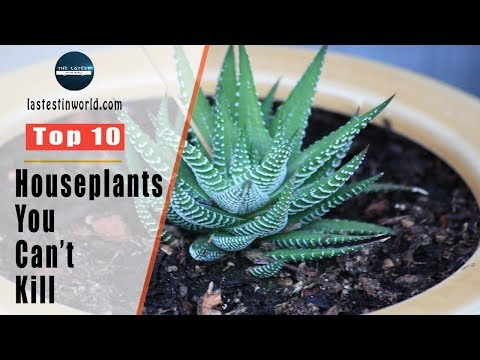 Top 10 Houseplants You Can't Kill