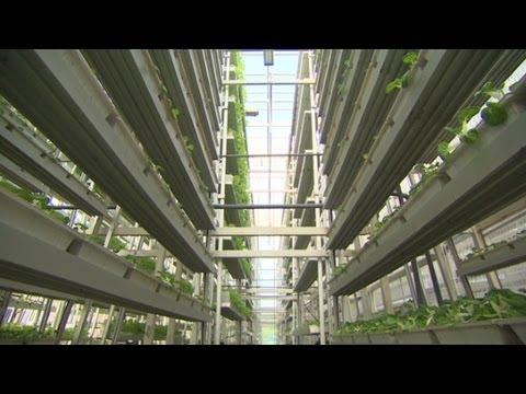 Singapore's Vertical Farming!