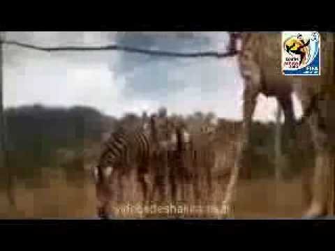 Waka Waka (Time for Africa) (2010 Fifa World Cup Song)