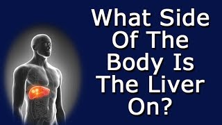 What Side Of The Body Is The Liver On?