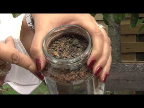 Agricultura caseira: preparando o solo