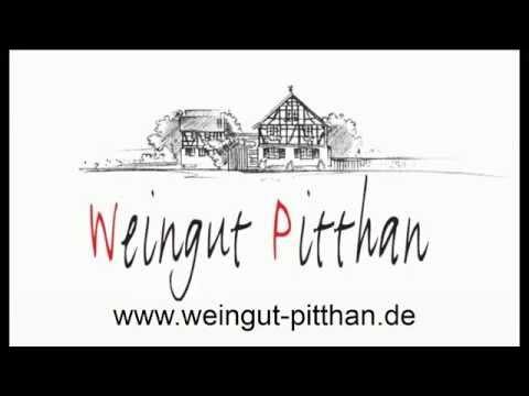 Dornfelder mit dem Vollernter lesen | Weingut Pitthan aus Zotzenheim/Rheinhessen