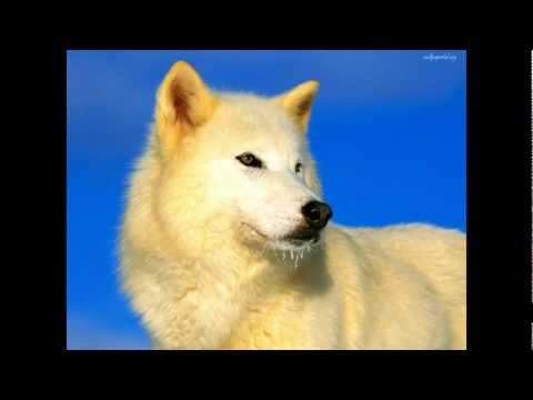 Мурат Тхагалегов - Одинокий волк (HD)