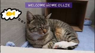A Stray Cat Followed Me Home   Meet Ollie the Cat