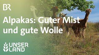 Alpakas: Guter Mist und gute Wolle | Unser Land | BR Fernsehen