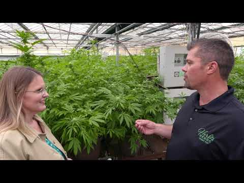 What is a Hemp Plant and How is it Grown?