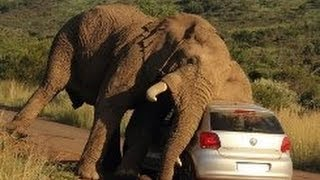 Дикая природа Африки. Нападения животных. Документальный фильм.