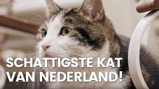 Amsterdamse kat wordt filmster
