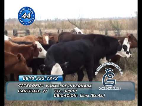 Lote VQ INV-  Lima Bs As