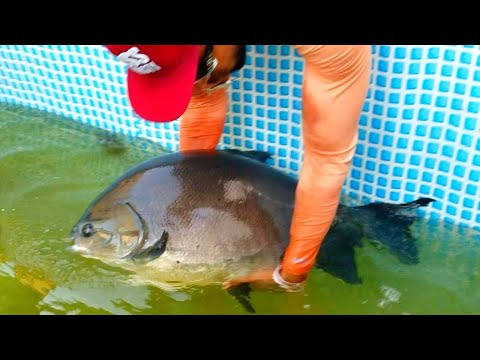 FISH-TRAP Feeds MEGA Canal Whales!! **POND MONSTERS**