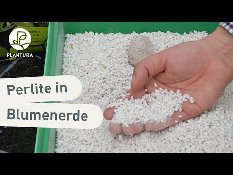 Weiße Kügelchen in Blumenerde: Was bringen Perlite? (Video)