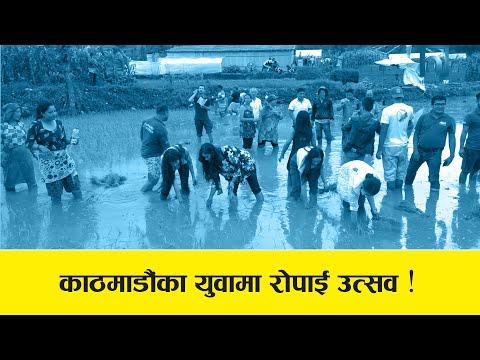 काठमाडौंका युवामा रोपाई उत्सव ! DHAN DIWAS | Asar 15