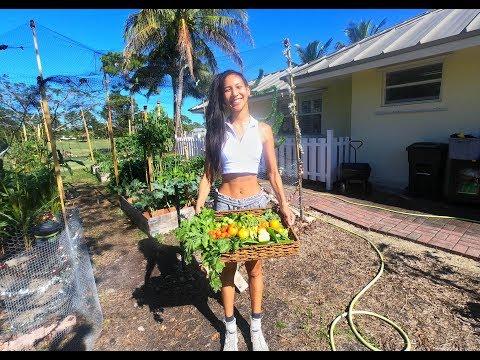 Harvest day in my garden เก็บผักในสวนปลอดสารพิษ ( ภาษาอังกฤษ ) l Jayy Crane's Organic Garden : EP1