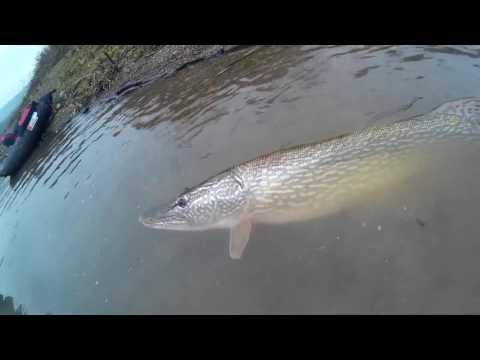 La pesca in aprile in video di Belarus
