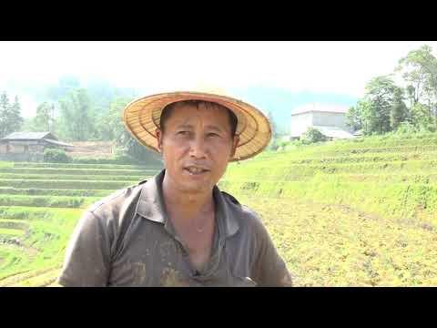 Xã Sín Chéng tập trung sản xuất lúa vụ mùa năm 2021