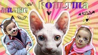 Котята / Выставка кошек в Волгограде / Богиня - кошка / Мимими кошечки / Хочу котенка