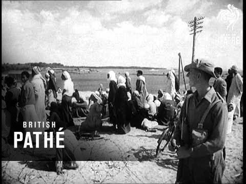 Pathe News Reviews 1951 (1951)