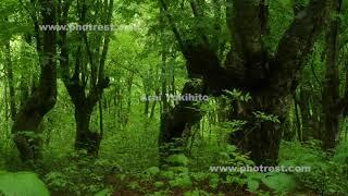 夏のブナ林