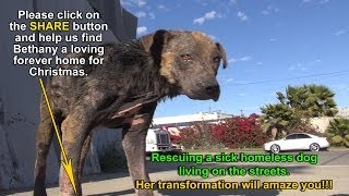 A homeless dog living on the streets gets rescued, transformed and is now looking for a home.