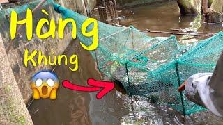 Đặt Bẫy Cá 12 Cửa Ngục Nhà Hoang Trúng Ổ Rùa , Cá Khủng