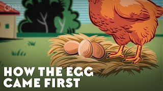 How the Egg Came First