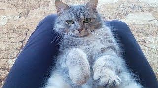 😺 Кот Матрос играет с бантиком