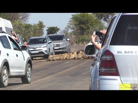 Leeus veroorsaak verkeersknoop