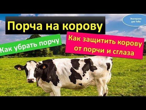 Порча на корову. Как убрать порчу. Как защитить корову от сглаза | Эзотерика для Тебя Советы Ритуалы