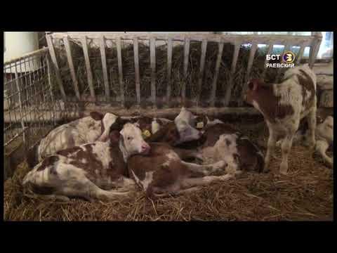 Зимовка скота в ООО