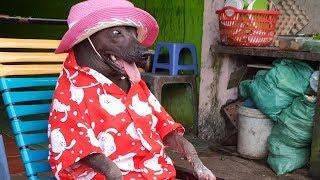Chú Chó Không Lông Xấu Xí Nhưng Lại Hóm Hỉnh, Đáng Yêu Nhất Hệ Hành Tinh