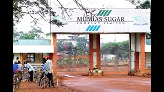 Gunmen kill Mumias Sugar manager - VIDEO