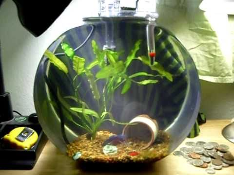 Can A Beta Fish Live In A Plastic Bowl Yahoo Answers