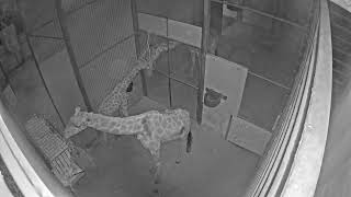 Perth Zoo Live Stream