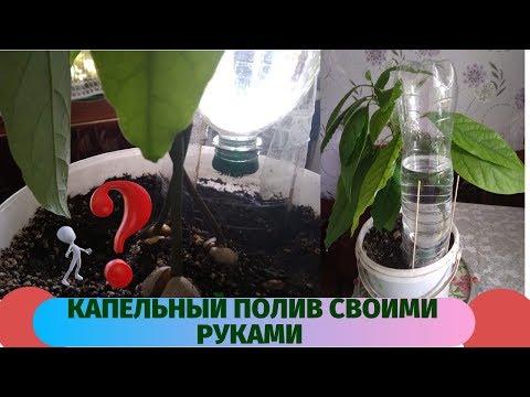 Очень простой бесплатный капельный полив для  комнатных растений.Можете спокойно отдыхать