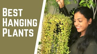 6 Best Hanging Plants For Your Home & Balcony | Care & Hanging Plant Decoration Tips