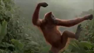 Funny Monkey Happy Birthday Song