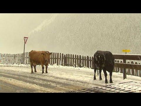 العرب اليوم - شاهد: أول تساقط للثلوج على ارتفاع 2000 متر في مرتفعات الألب