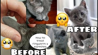 How to treat ringworm and earmites in Cats | Russian blue kitten | Philippines 🇵🇭