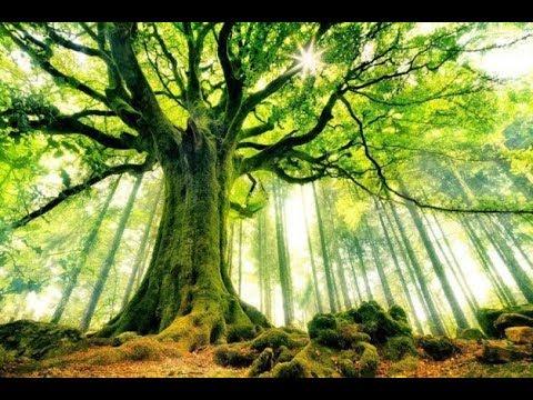 Árboles y bosques, redes inteligentes