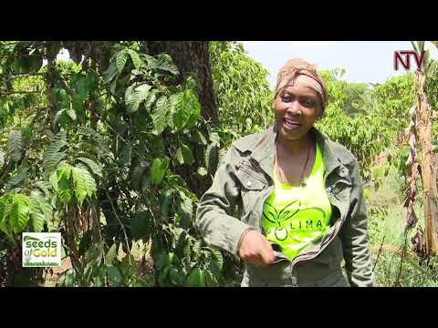 SEEDS OF GOLD: Bettina Tumuhaise gives you reasons as to why you should choose farming